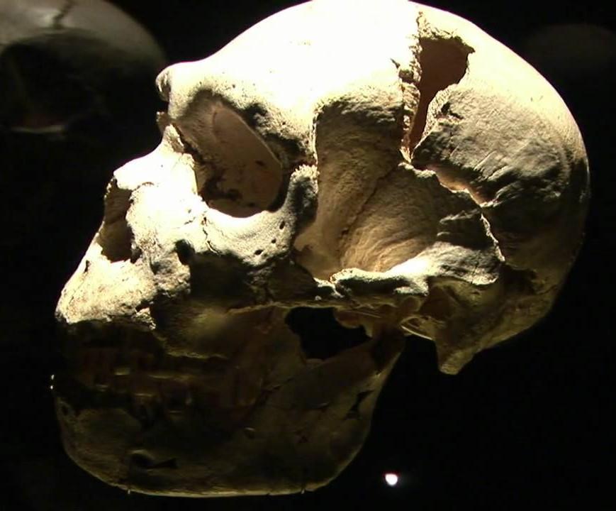 Miguelón, Museo Evolución - Guías Turísticos Burgos