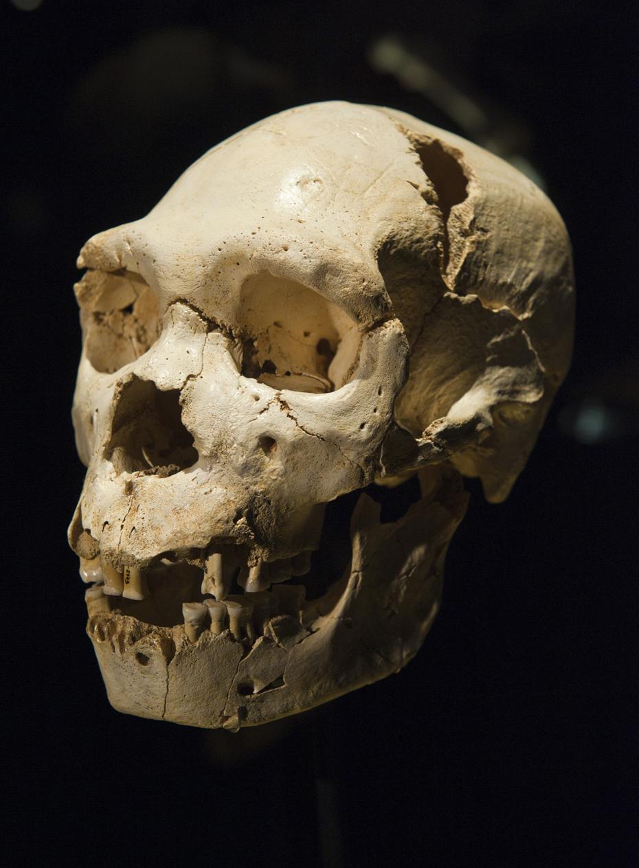 Miguelón - Museo Evolución Humana - Guías Turísticos Burgos